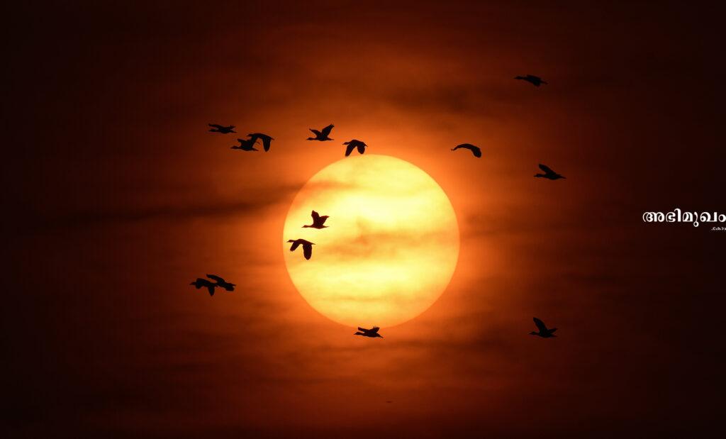ഷെല്ബിന് ഡീഗോ, അഥവാ പക്ഷി വേട്ടക്കാരന് പക്ഷി ഫോട്ടോഗ്രാഫറായ കഥ 6